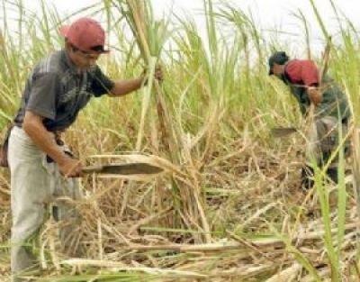 Defensoría denuncia que grandes empresarios asfixian industria de azúcar en Bermejo