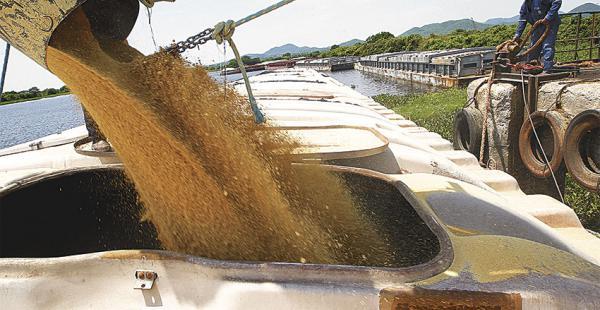 Los productores de oleaginosas esperan que el clima no debilite la producción en 2016
