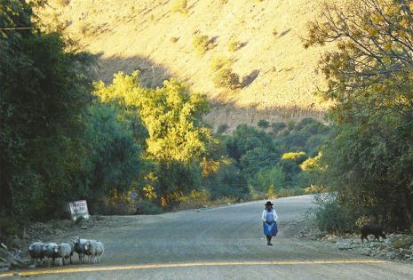 Pintorescas y serpenteantes carreteras   Los pobladores mantienen arraigadas sus costumbres ligadas a prácticas ancestrales como la del pastoreo de ovejas