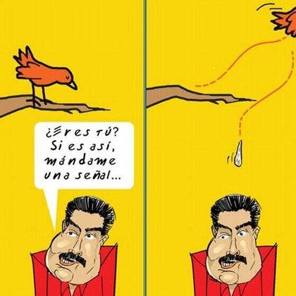 pajarrito
