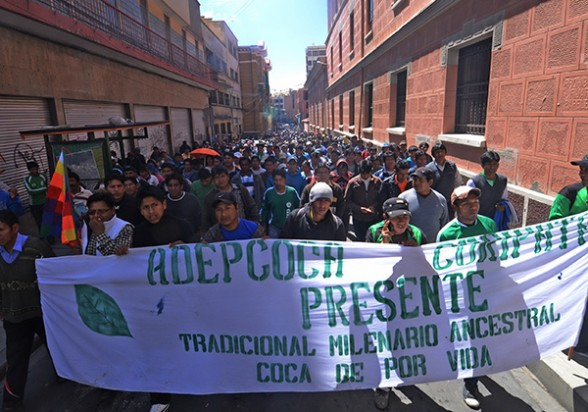 Marcha de productores de coca de La Paz, el 2015. -   Apg Agencia