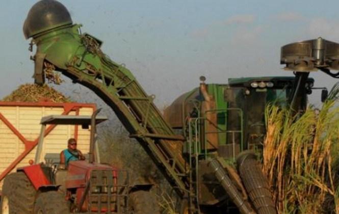 Cañeros piden liberar la exportación de azúcar ante el inminente aumento de la producción