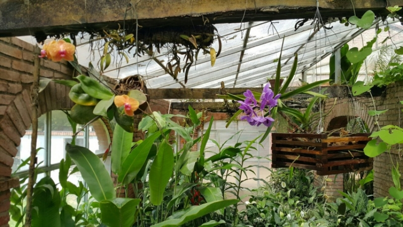 El Jardín Botánico: un lugar que no puedes dejar de visitar