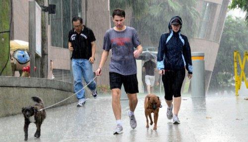 pasear_perro_lluvia