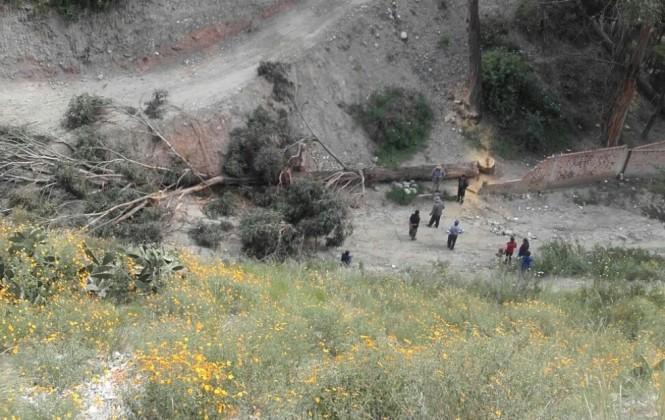 Alarma entre los vecinos de Bolonia, supuestos loteadores talan árboles y causan temor