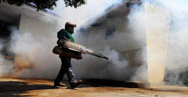 El mosquito Aedes aegypti necesita una semana para reproducirse. Es el insecto que transmite el dengue, el chikunguña y el zika