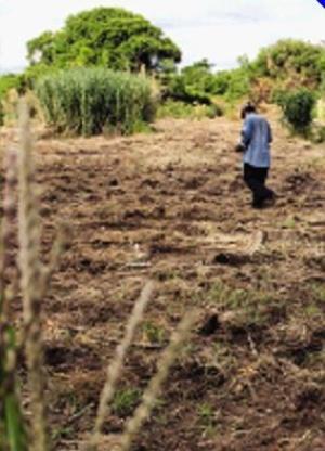 Tres regiones afectadas por las sequías piden ayuda