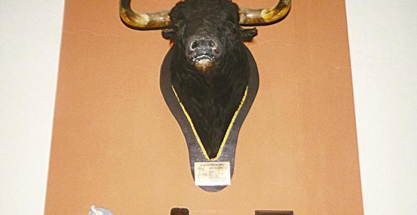 BISONTE. La réplica de un bisonte que siempre admiraba Jorge Roca, es una de las reliquias que quedó y se conserva pero ahora está incautada por orden fiscal en la propiedad Horizonte de la vía al norte