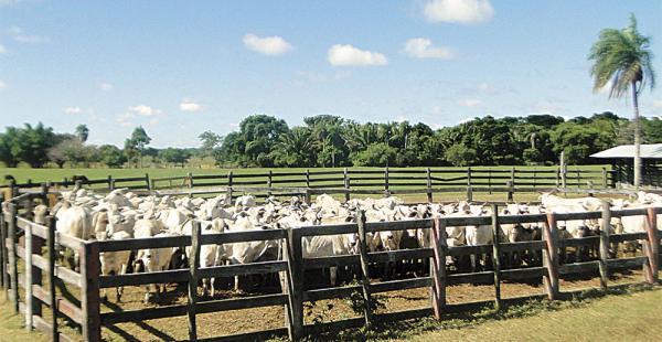 El ganado que se encuentra incautado en la hacienda Horizonte a una familia involucrada en el caso