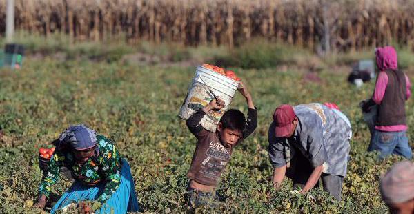 Según la ONU, cerca de 168 millones de niños trabajan en todo el mundo