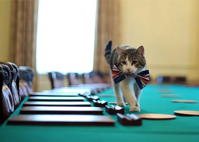 Larry, el gato Chief Mouser de 10 Downing Street, ronda tranquilo la sala de reuniones.