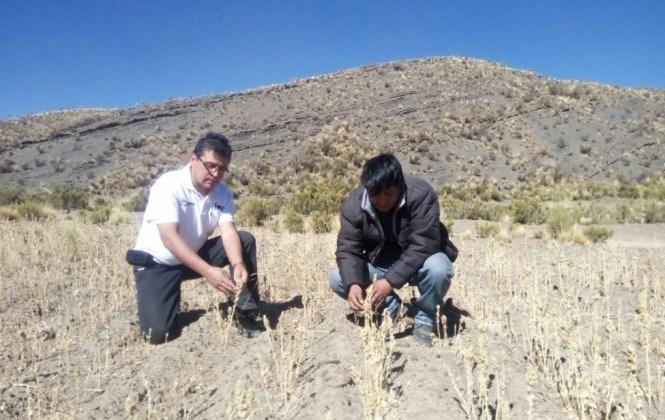 INSA verifica daños por sequía y helada en Caracollo