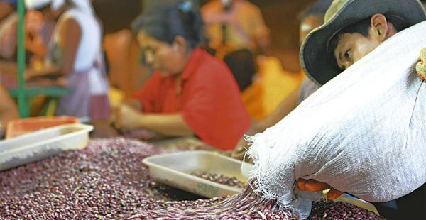 Los productores de frejol negro, que en su mayoría (85%) están en Santa Cruz, se ven afectados por la caída de los precios del quintal con destino a Brasil