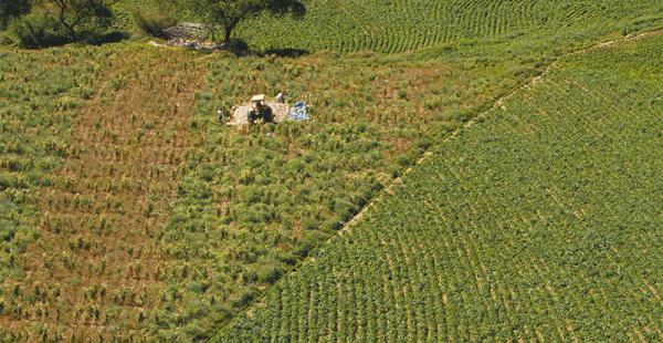 Para 2021, todo el territorio nacional puede estar titulado y el conflicto por la tenencia de tierra disminuirá. Es el reto del INRA para esta gestión