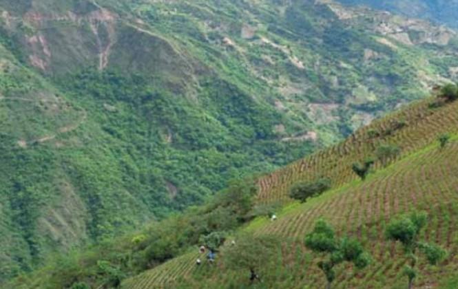 UNODC y la Unión Europea recomiendan a Bolivia estudios sobre la producción de cocaína