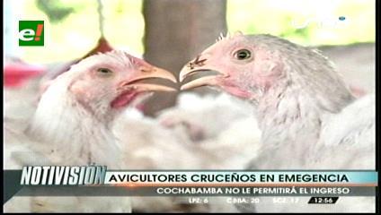 Avícolas de Cochabamba no dejarán ingresar pollos de Santa Cruz