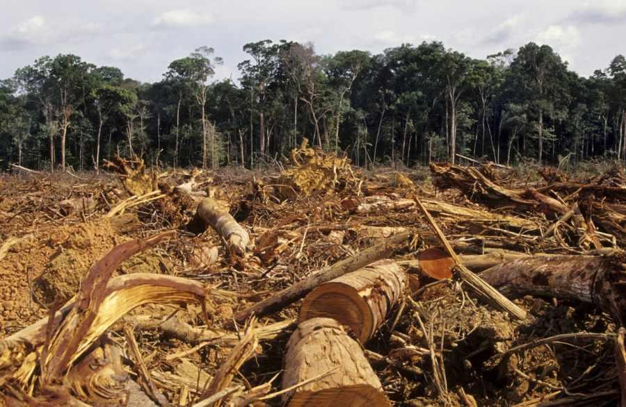 FAO: se puede producir más  alimentos sin talar bosques