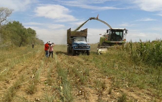 CAO proyecta decrecimiento en el sector agropecuario para este año
