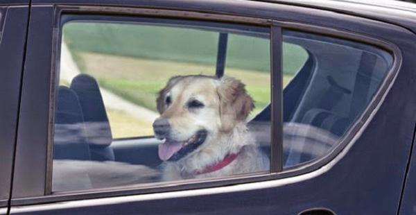 En La Paz será prohibido encerrar a las mascotas en el automóvil