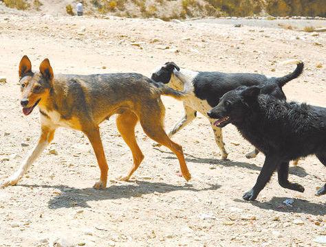 Un grupo de perros callejeros.