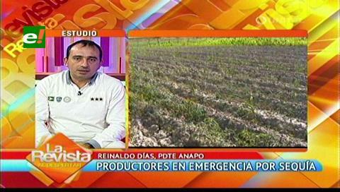 Santa Cruz: ANAPO estima pérdidas de $us. 180 millones por la sequía