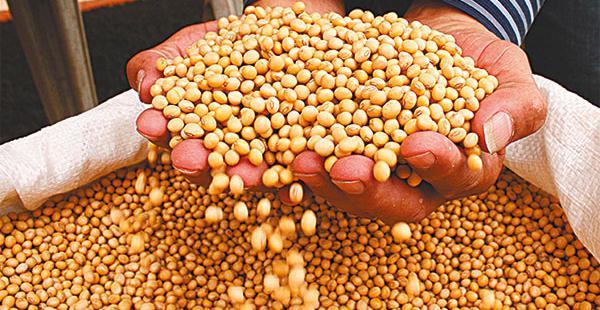 Sube el precio del grano de oro