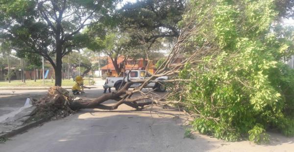 Árboles caídos fueron reportados en distintas zonas de la capital cruceña