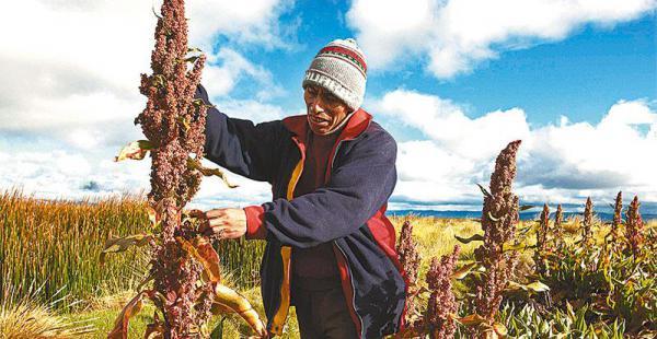Bolivia tiene mercado asegurado para la quinua en Estados Unidos