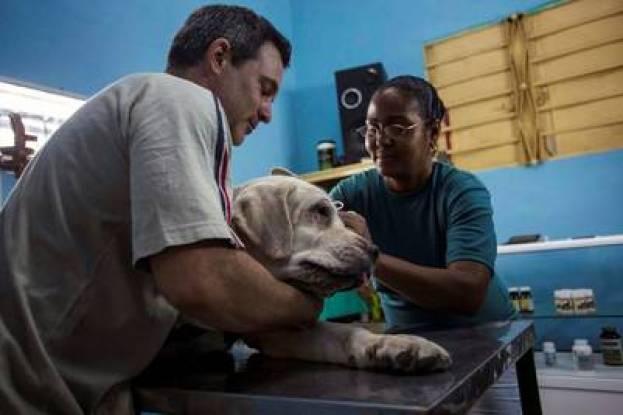 Un cubano sujeta a su labrador durante una consulta en una veterinaria en La Habana. / AP