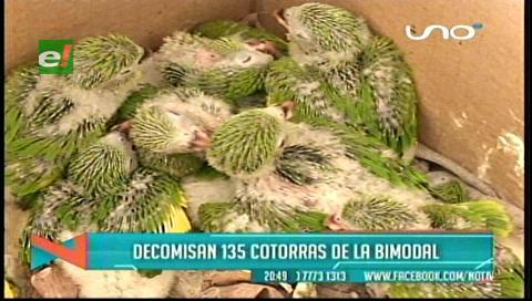 135 aves silvestres fueron rescatadas en la terminal Bimodal