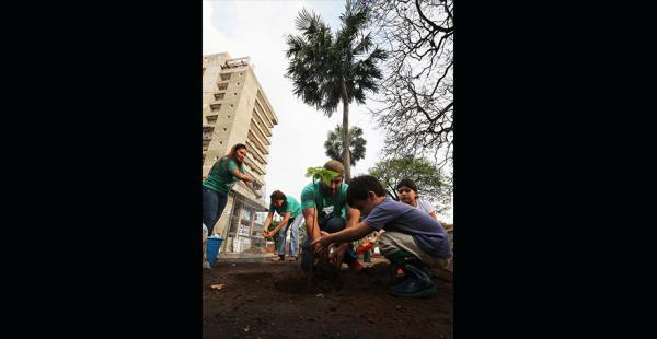 Voluntarios de Colectivo Árbol colocaron plantines en la calle La Paz
