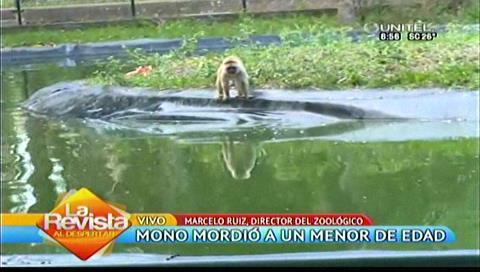 Un mono mordió a un niño de 7 años en el Zoológico de Santa Cruz