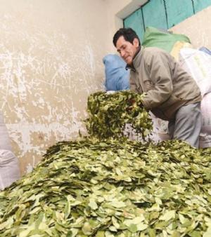 Cocaleros hoy presentarán proyecto de ley Morales