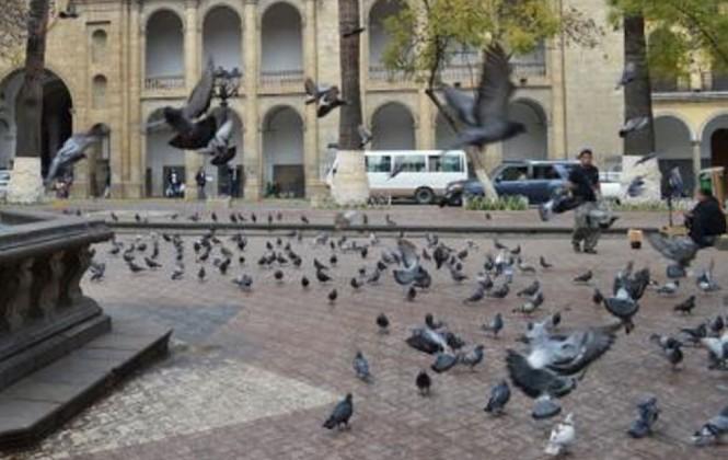 Determinan que un parásito y una bacteria causaron la muerte de palomas en Cochabamba
