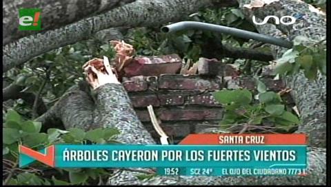 Fuertes vientos tumbaron árboles y letreros en Santa Cruz