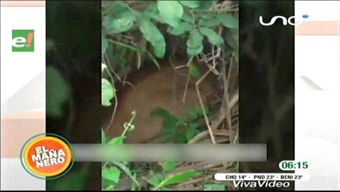 Capturan a un puma en Trinidad