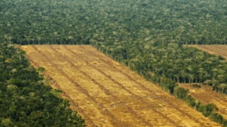 denuncian-la-deforestacion-de-700-hectareas-de-bosque-en-bolivia-para-la-plantacion-de-ca-241a-de-azucar-_372670