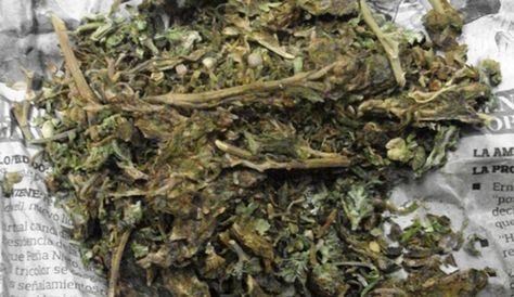 Los paquetes de marihuana fueron camuflados en paquetes dentro de mochilas, informó la Felcn. Foto: Internet