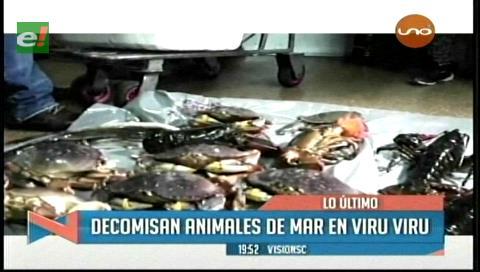 Decomisan animales de mar en Viru Viru