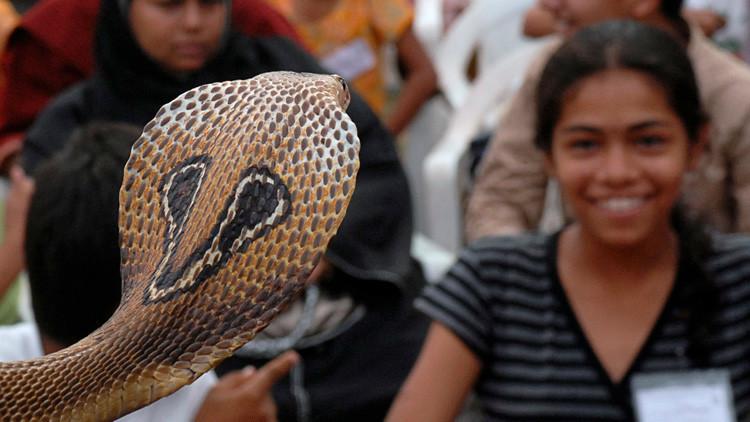 VIDEO: Un joven fallece en la India tras intentar besar a un cobra para hacerse una foto