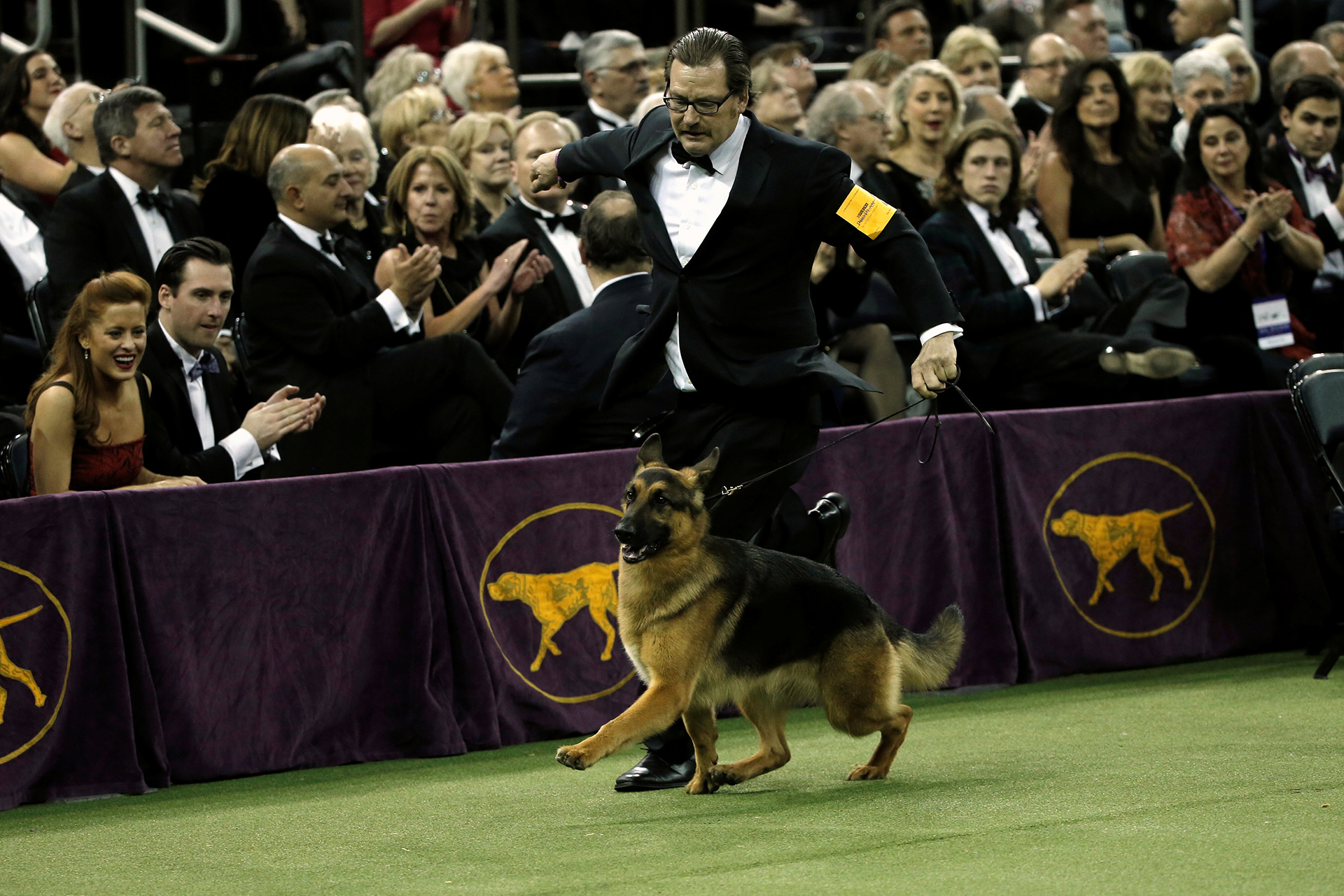 Rumor, el Ovejero Alemán ganador de la edición 141 del Westminster Kennel Club Dog Show en Nueva York