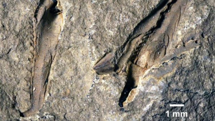 Este 'monstruo acuático' recién descubierto le pondrá los pelos de punta