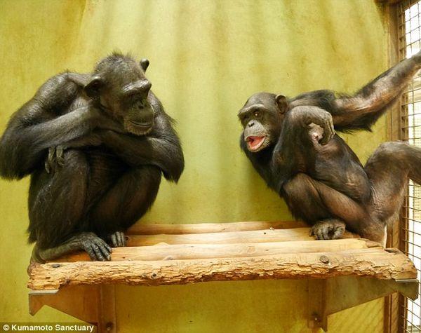 Kanako con una chimpancé que es su única amiga (Daily Mail)