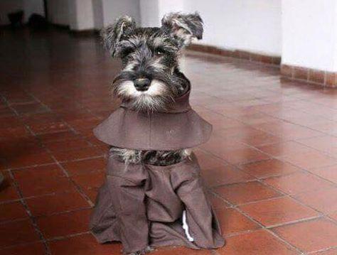 Fray Bigotes, éste es el cachorrito que habrían adoptado los franciscanos den Cochabamba.