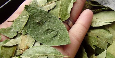 Estudiantes del Chapare estudiarán la historia de la coca desde 2017