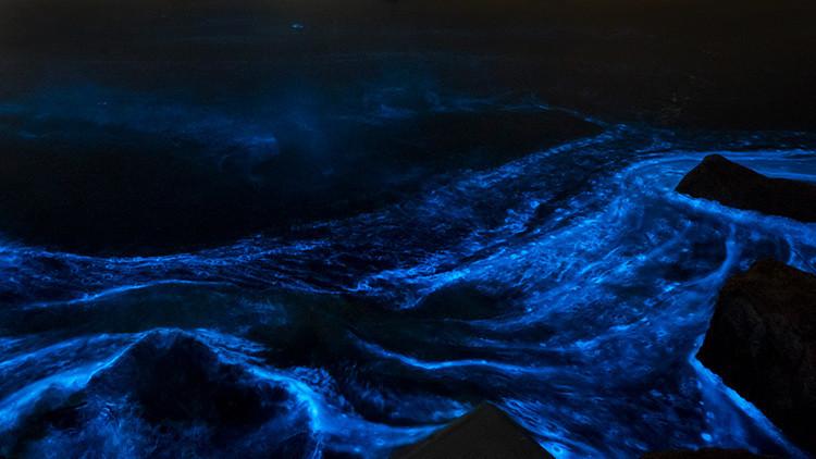 Unas peligrosas algas iluminan el mar con 'luces de neón' (Espectaculares fotos)