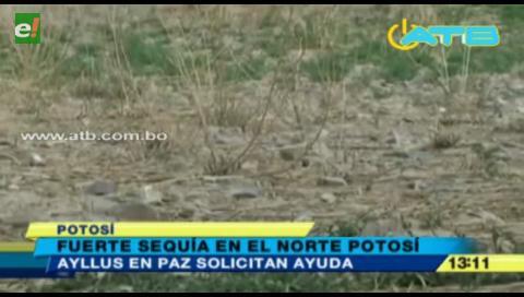 Ayllus en Paz perdieron el 50% de sus cultivos por la sequía