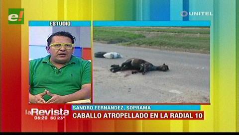 Caballos muertos en las vías causan preocupación en la ciudadanía cruceña