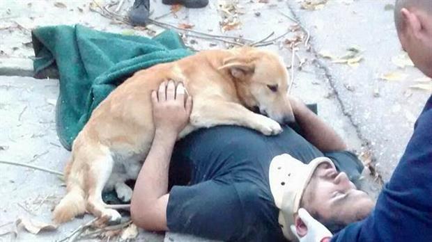 Tony, el perro que acompañó a su dueño accidentado