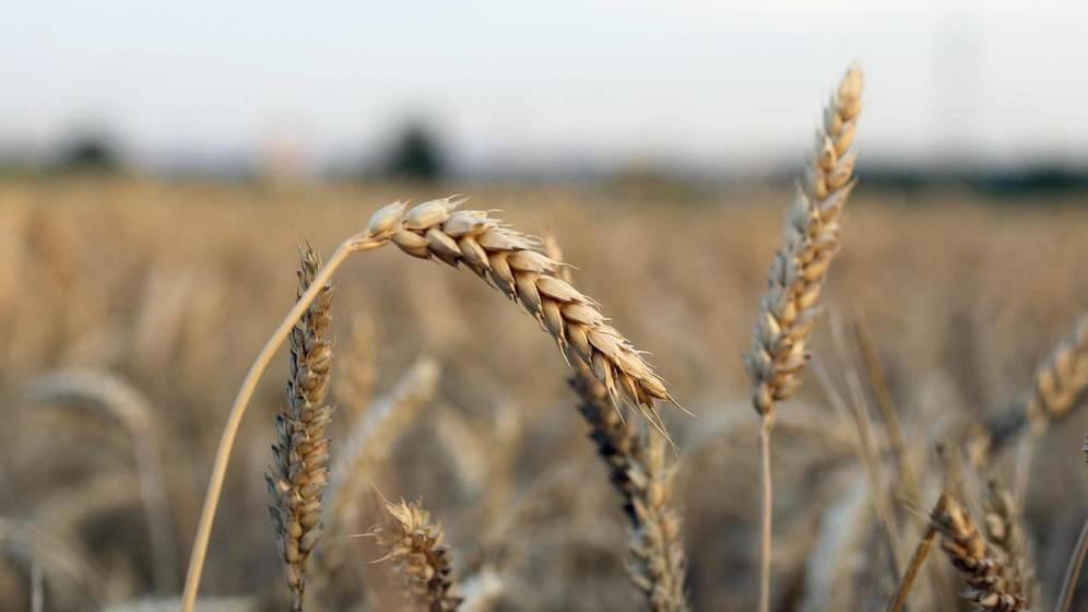 Foto: El gluten, a debate. (iStock)